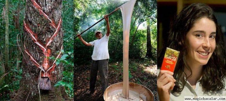 Quintana Roo un Estado de Chicleros