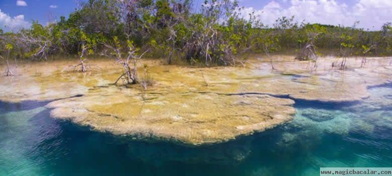 Los estromatolitos de Bacalar.
